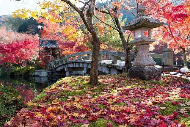 秋の永観堂/Eikando in autumn