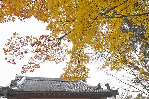 【写真】紅葉 : 小町寺