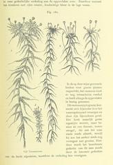 """British Library digitised image from page 343 of """"Onze aarde. Handboek der natuurkundige aardrijkskunde ... Met 150 platen en 20 kaartjes in afzonderlijken Atlas"""""""