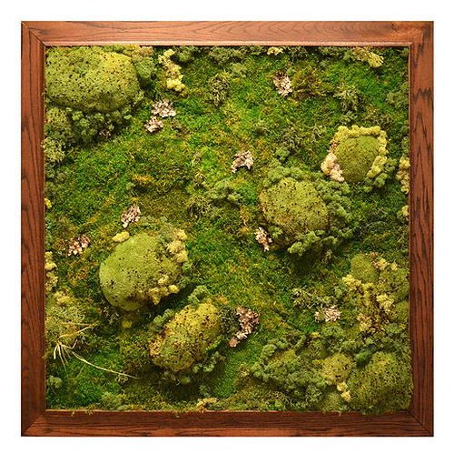 Ashley Lieber Moss for Meditation, Green Eco Home Decor