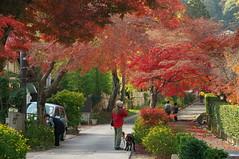 嵯峨野の秋