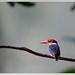 Oriental Dwarf Kingfisher @ Someshwar WLS by shivanayak