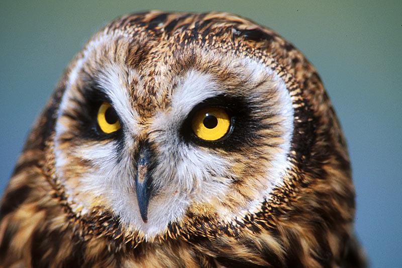 Wildlife in British Columbia, Canada: