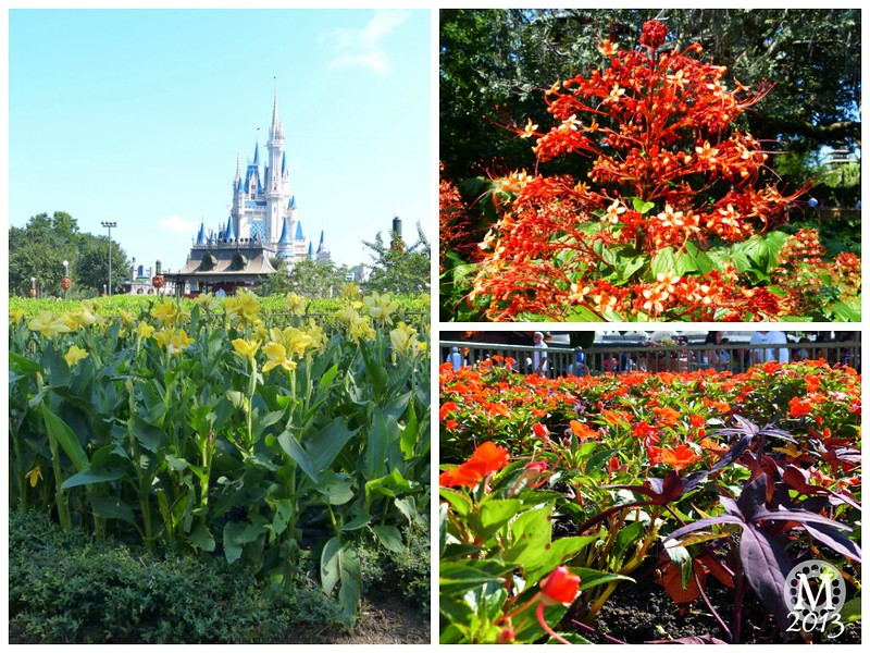 Nature at Magic Kingdom