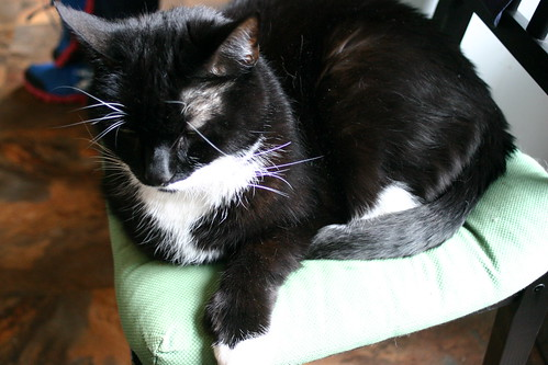 black cat on green cushion