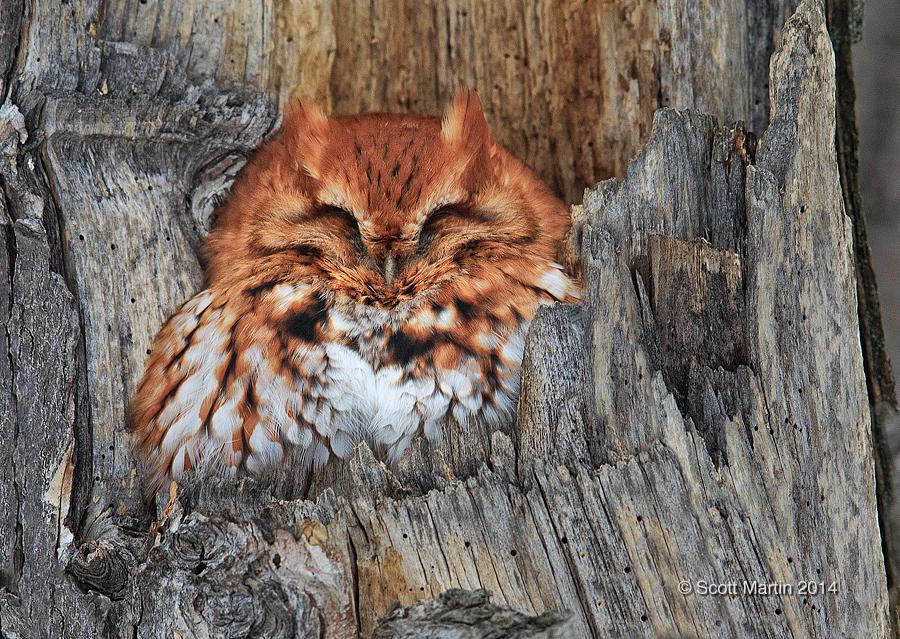 voyeur Jeff owl