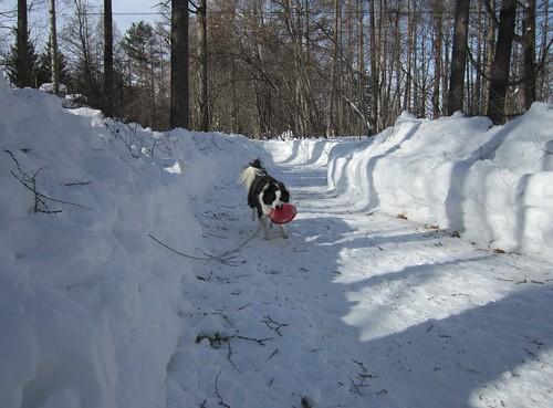 雪の通路でのフリスビー 2014年2月18日09:21 by Poran111