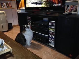 Yama-neko in TV!