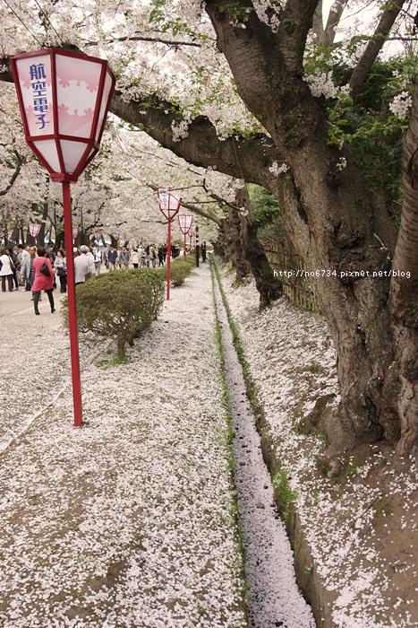20140502_AomoriSakura_2775 ff