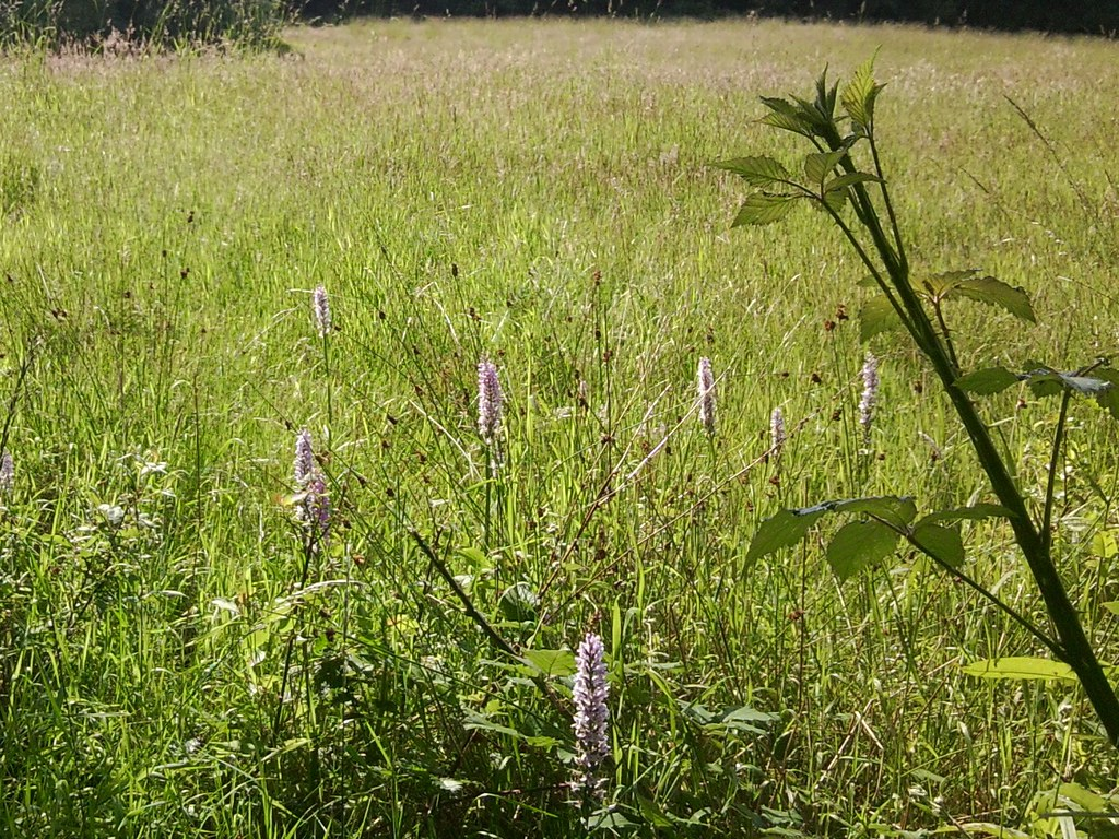 Orchids Guildford to Horsley