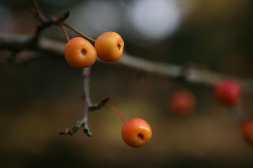 Fruitu debekatuak