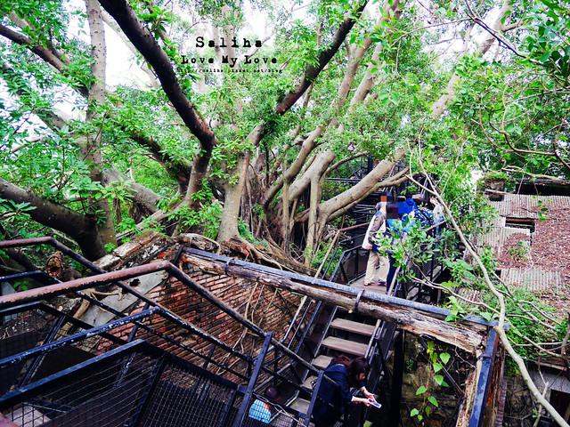 台南一日遊景點推薦安平樹屋安平老街 (35)