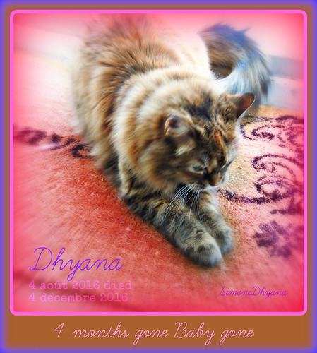 Thinking 4 you ... Remembering you baby... Je me souviens de toi Dhyana