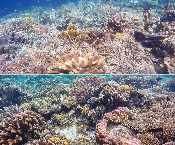 Underwater Maratua 3