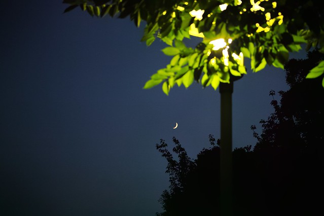 evening moon / 宵の月