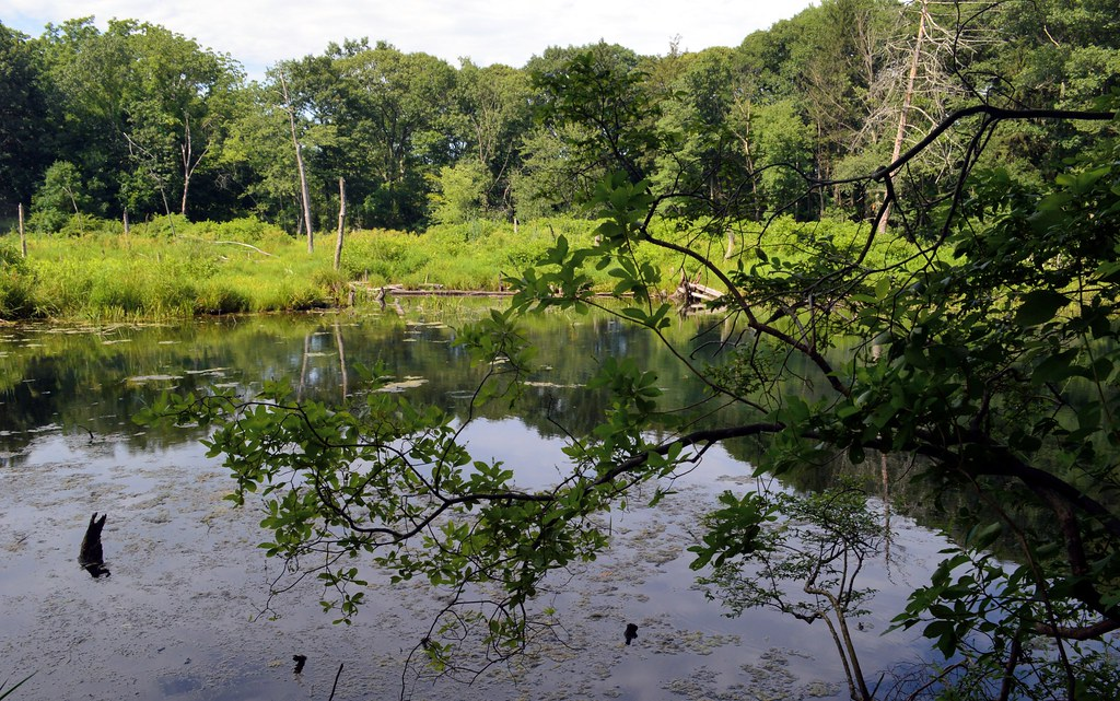 Suffolk County Park Nature Preserve