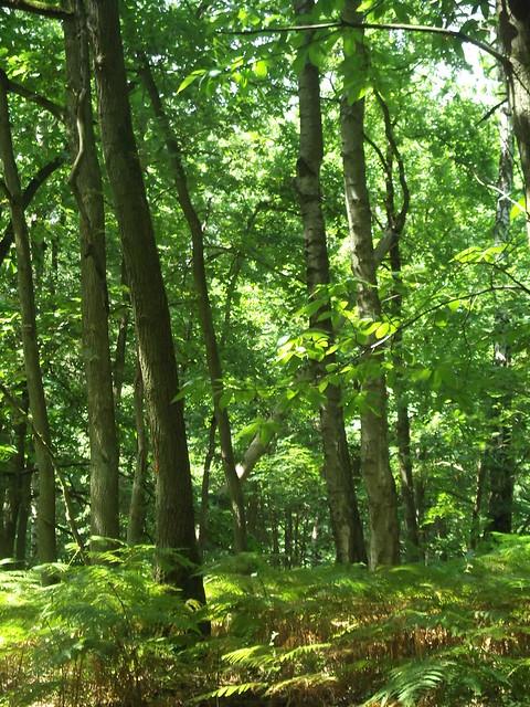 Soleil et forêt, toujours un joli rendu