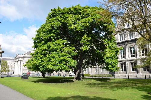 Noch ein Baum auf einem Rasen