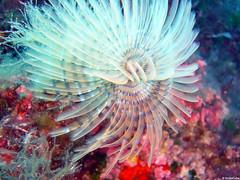 fish(0.0), lionfish(0.0), scorpionfish(0.0), pomacentridae(0.0), coral reef(1.0), animal(1.0), coral(1.0), organism(1.0), marine biology(1.0), invertebrate(1.0), macro photography(1.0), marine invertebrates(1.0), close-up(1.0), underwater(1.0), reef(1.0), sea anemone(1.0),