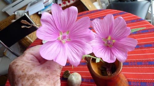 Two flower in a vase width=