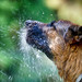 Drinking from the hose by AlexanderArntsen over 150.000 views. Thank you!
