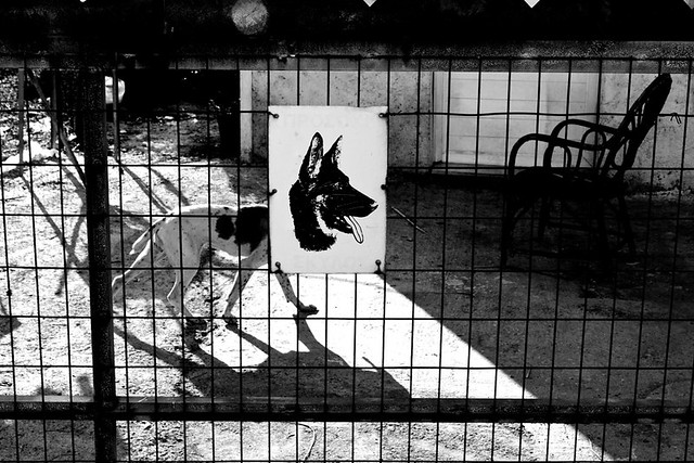 Dog - Animals in Streets