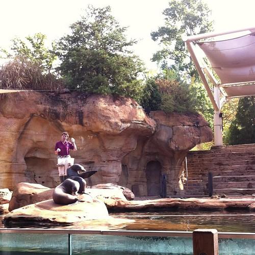 Sea Lion Show #memphiszoo #memphis #sealions #memphisdaytrip #homeschoolfieldtrip