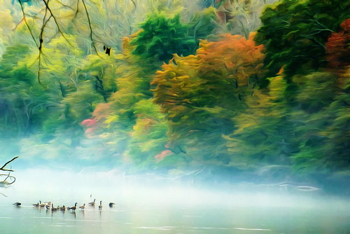 Canada Geese on the Chatahoochee