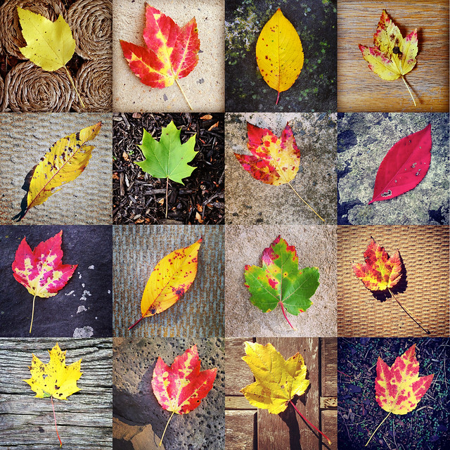 collage - leaves