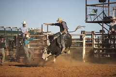 western riding(0.0), equestrian sport(0.0), barrel racing(0.0), animal sports(1.0), rodeo(1.0), event(1.0), sports(1.0), bull riding(1.0),