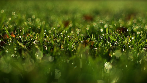 blinking grass