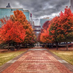 Fall in Atlanta #HDR #snapseed