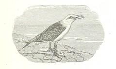 """British Library digitised image from page 383 of """"La Mer Libre du Pole ... Traduit de l'Anglais et accompagné de notes ... par F. de Lanoye. Ouvrage illustré de 70 gravures, etc"""""""