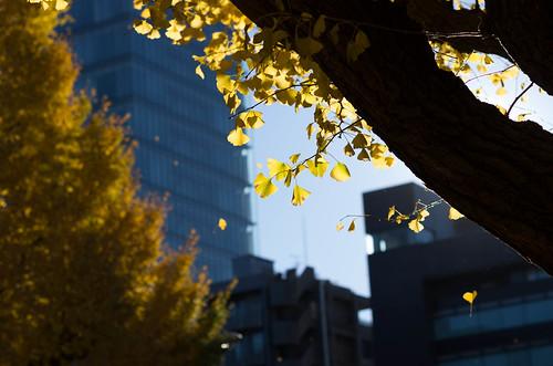20131130_6800-1神宮外苑