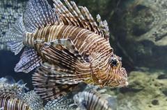 Georgia Aquarium -106