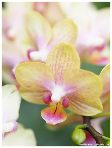 Orchid #01