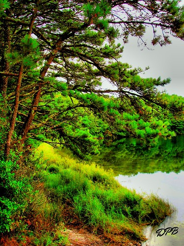 trees green nature water beautiful beauty pond natural capecod massachusetts mass naturalbeauty southyarmouth flaxpond scenicsnotjustlandscapes