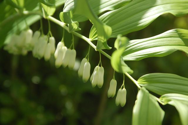 Spring Flowers in Sunken Garden
