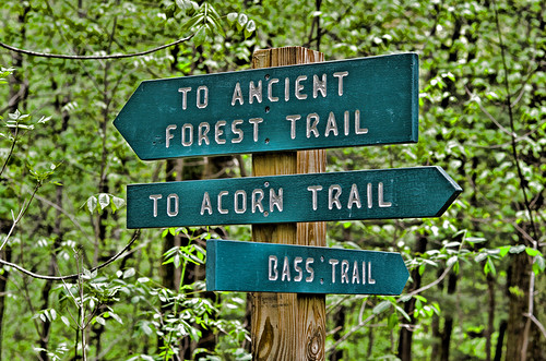 AncientForestSign