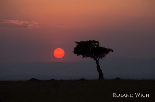 africa sunset tree landscape kenya safari mara afrika kenia masai