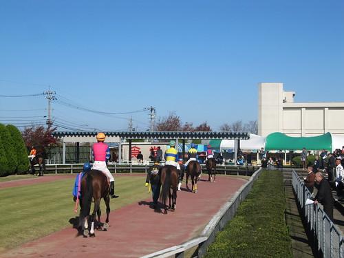 金沢競馬場のパドック周回