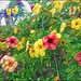 flowers blooming in the garden by ♣Cleide@.♣