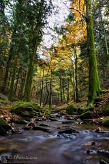 Parco Nazionale delle Foreste Casentinesi, 4 giorni di trek