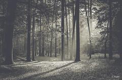 Foresta di Fontainebleau