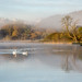 Swans on #Windermere #LakeDistrict by Joe Dunckley