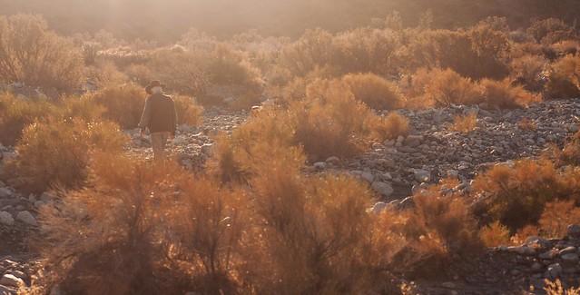 Week 47 ' Golden Hour', Nikon D90, AF Micro-Nikkor 60mm f/2.8D