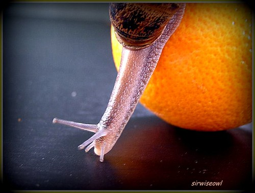 The Snail And The Orange by sirwiseowl