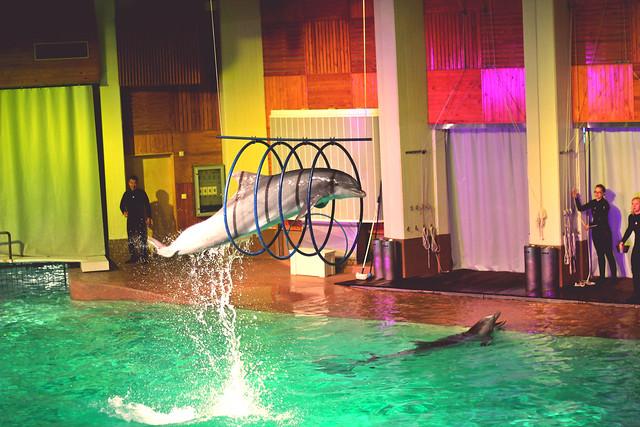 delfiii