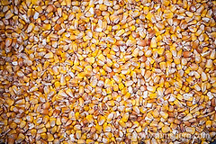 Corn kernelsIndiana PA