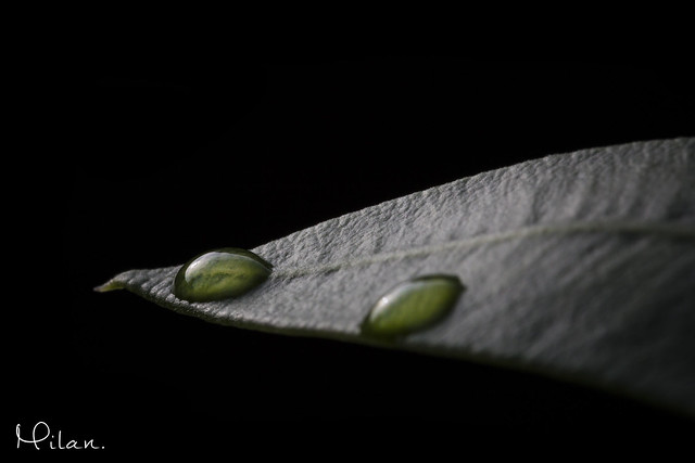 Leaf The Drops